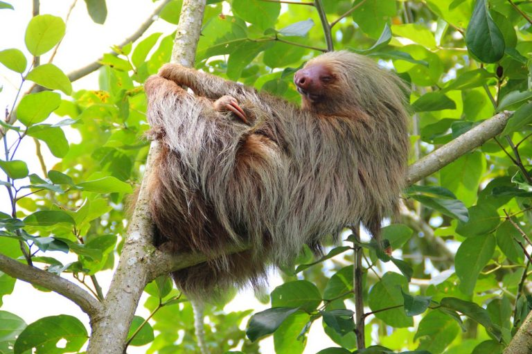 Sloth spotted during Wildlife Tour in Costa Rica
