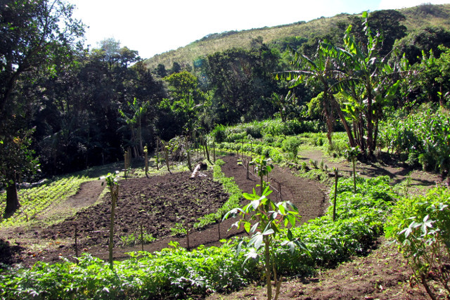 Sustainable agriculture in coffee farm in Costa Rica