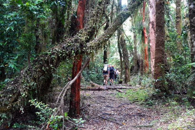 Hiking through the Forests of Mapu Lahual in Chile