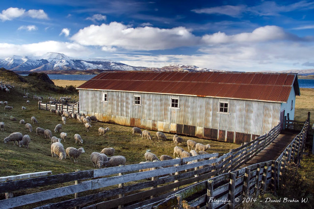 Patagonia Estancia Travel - Sheep Farming