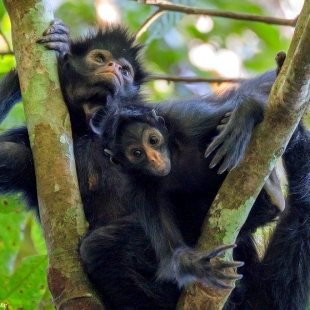 Monkeys on Peru Amazon Wildlife Tour