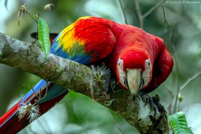 Amazon Wildlife - Parrots