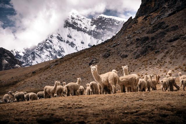 Peru-Ausangate-Mountain