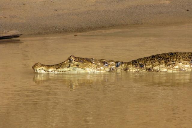 Colombia-Llanos-Wildlife-Cayman
