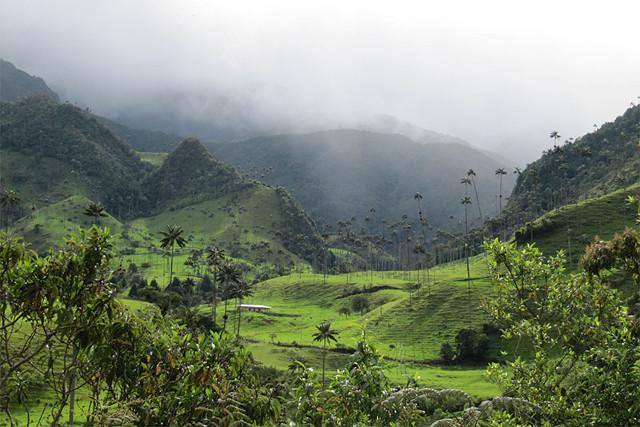 Colombia-Los-Nevados-Cocora