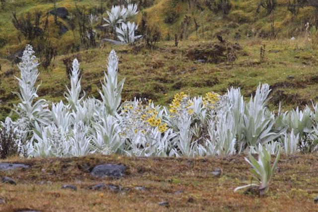 Colombia-Los-Nevados-Paramo