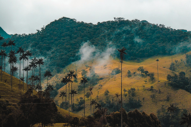 Colombia-Hiking-Cocora-Valley