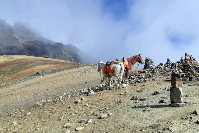 Peru-Ausangate-Trek-Packhorses