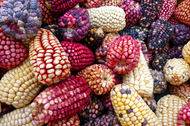 Vegan-Travel-Colorful-Corn