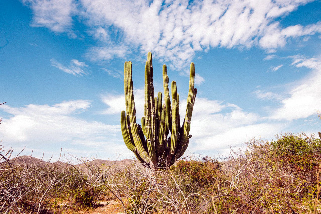 Mexico-Baja-California-Adventure-Tour-Cactus