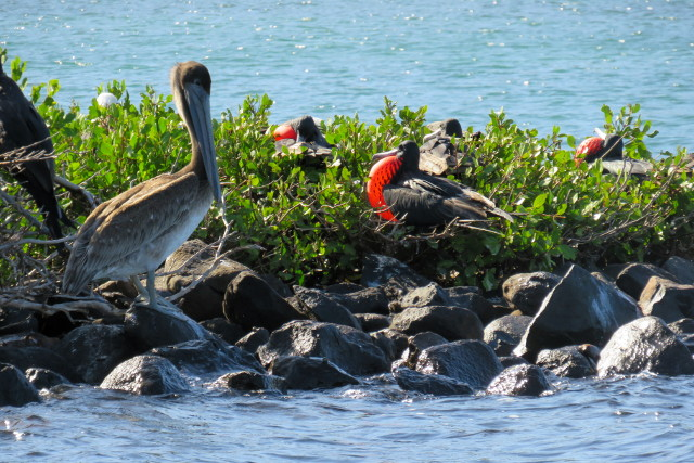 Mexico-Baja-California-Adventure-Tour-Isla-Espiritu-Santo-Birdwatching