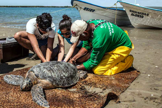 Mexico-Baja-California-Wildife-Tour-Sea-Turtle-Restoration