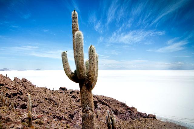 Bolivia-Uyuni-Salt-Flat-Colored-Lagoons-Cactus