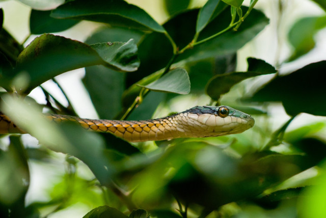Brazil-Pantanal-Wildlife-Safari-Snake