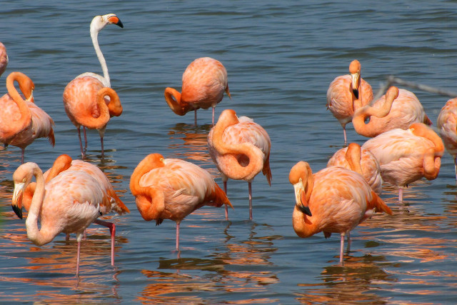 Ecuador-Galapagos-Island-Hopping-Flamingos