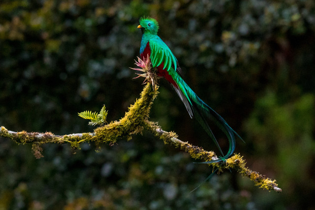 Costa-Rica-Self-Drive-Holiday-Quetzal